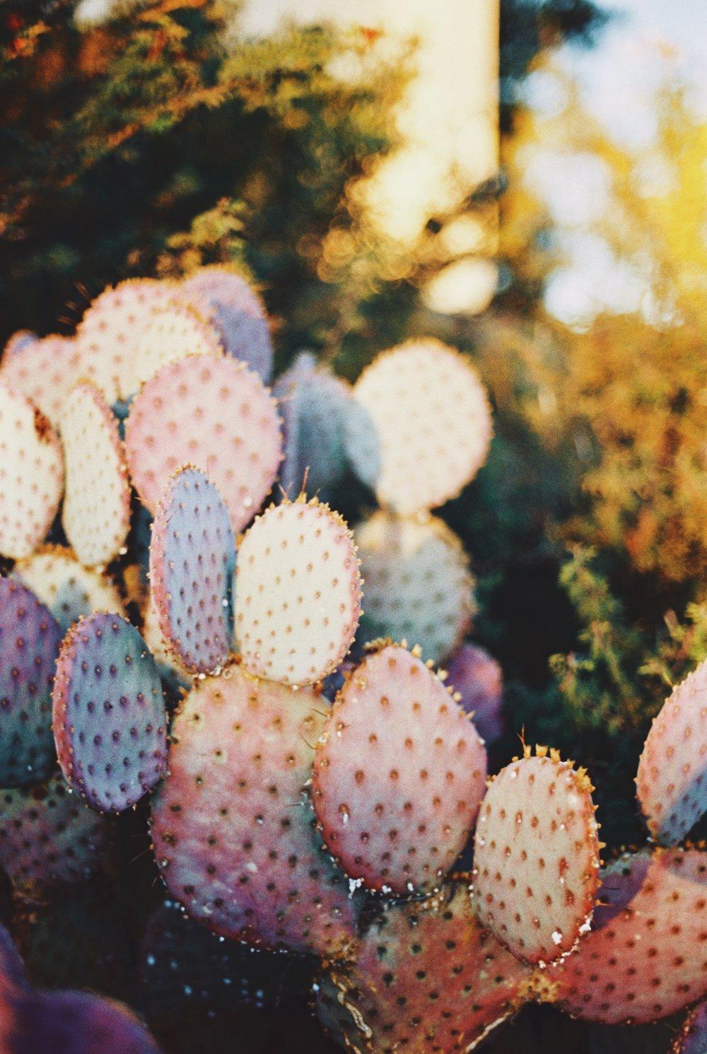 Arizona 2.jpg