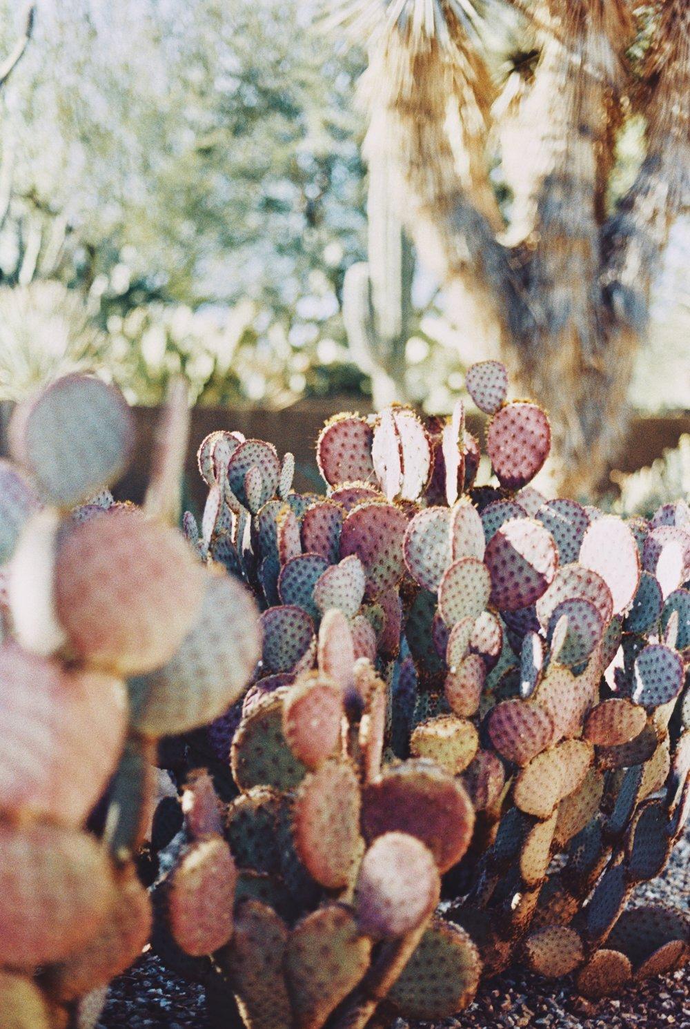 Arizona 18.jpg