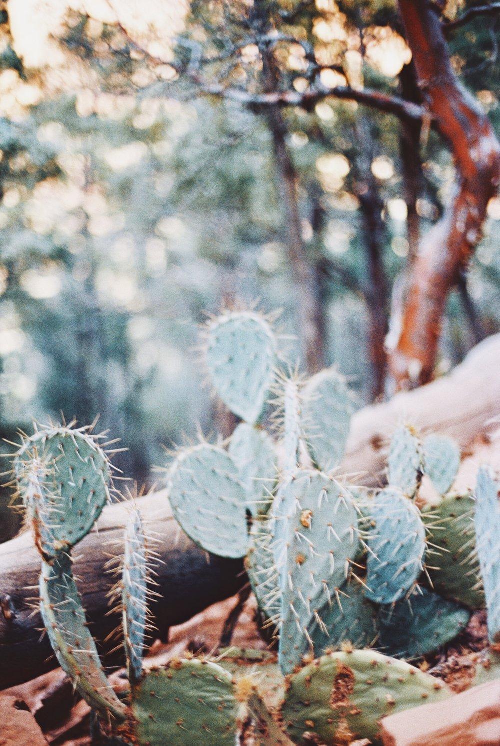 Arizona 19.jpg