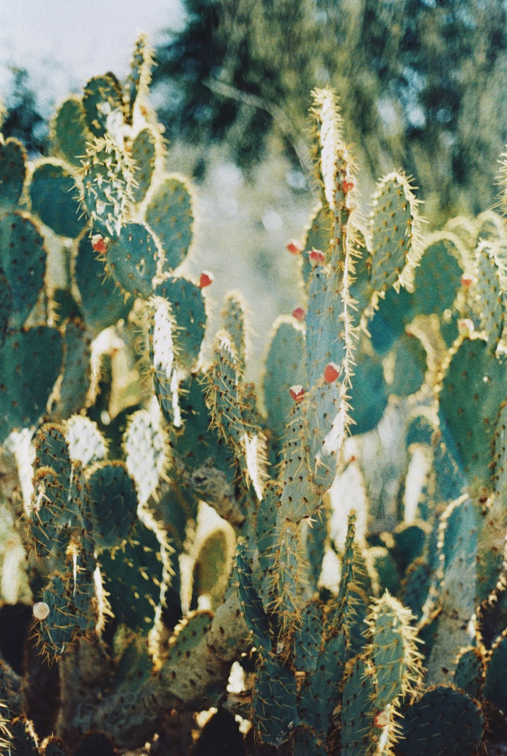 Arizona 21.jpg