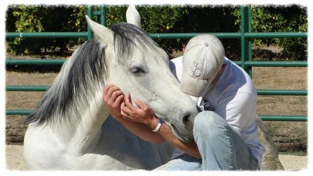 healing horse.jpg