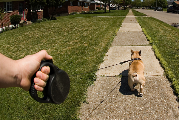 A dog is walking on a flexi leash