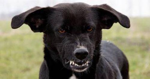 dog-growling.jpg