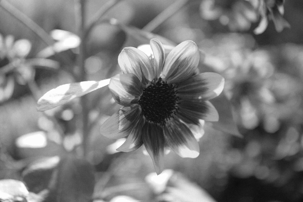 Flower || rebeccashann.com