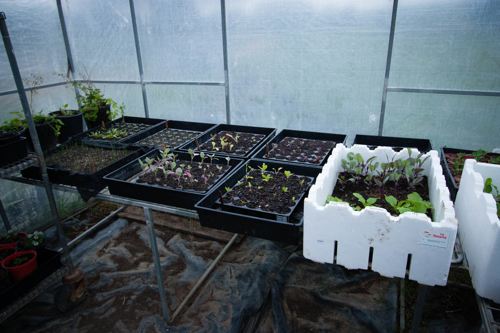 Winter Seedlings || thinkbiglivesimply.com