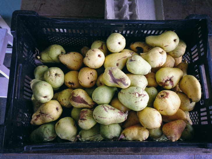 Pears ||thinkbiglivesimply.com