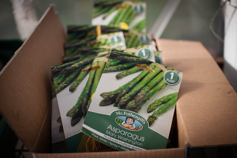 Asparagus || thinkbiglivesimply.com
