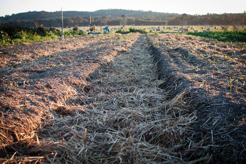 Mulched Pathways || thinkbiglivesimply.com
