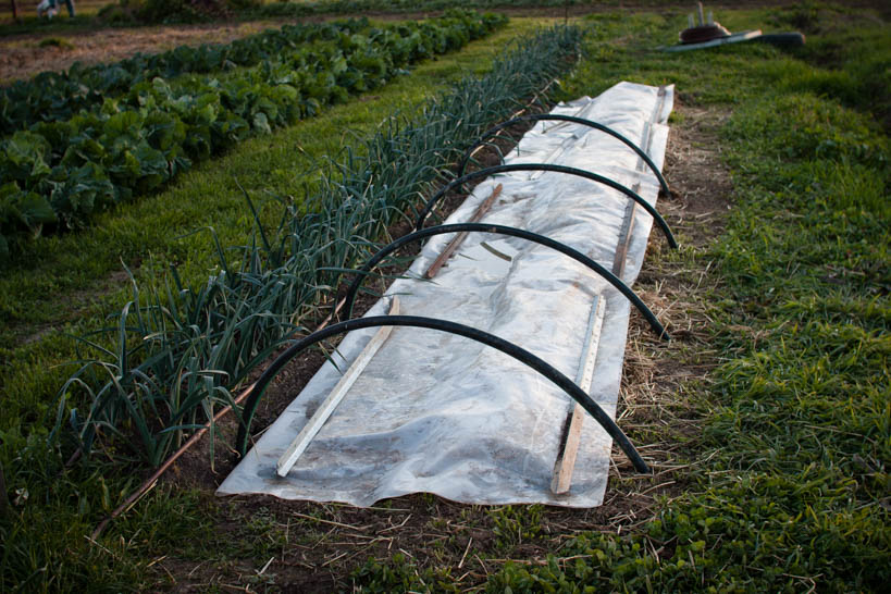 Mini Hoop House || thinkbiglivesimply.com