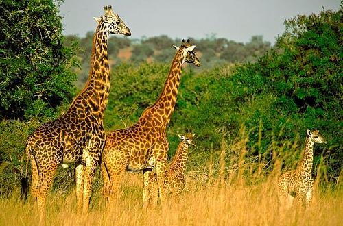 Akagera-National-Park.jpg