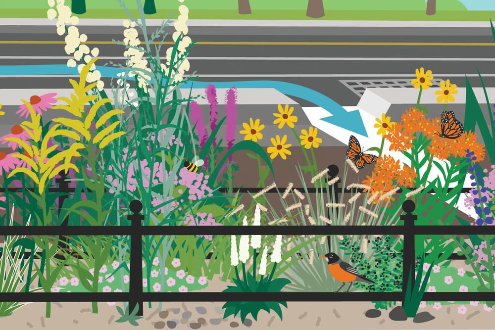 Bioswale illustration_detail 02