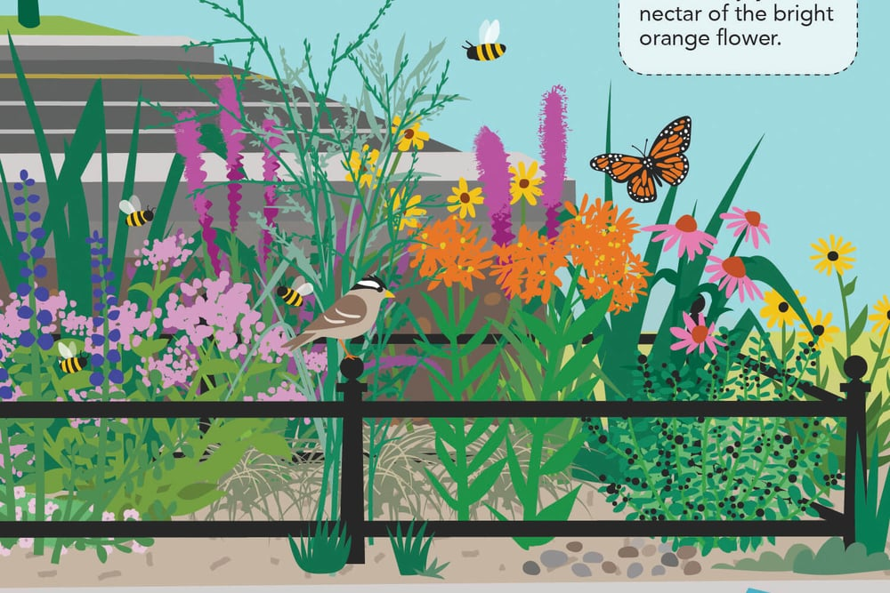 Bioswale illustration_detail 03