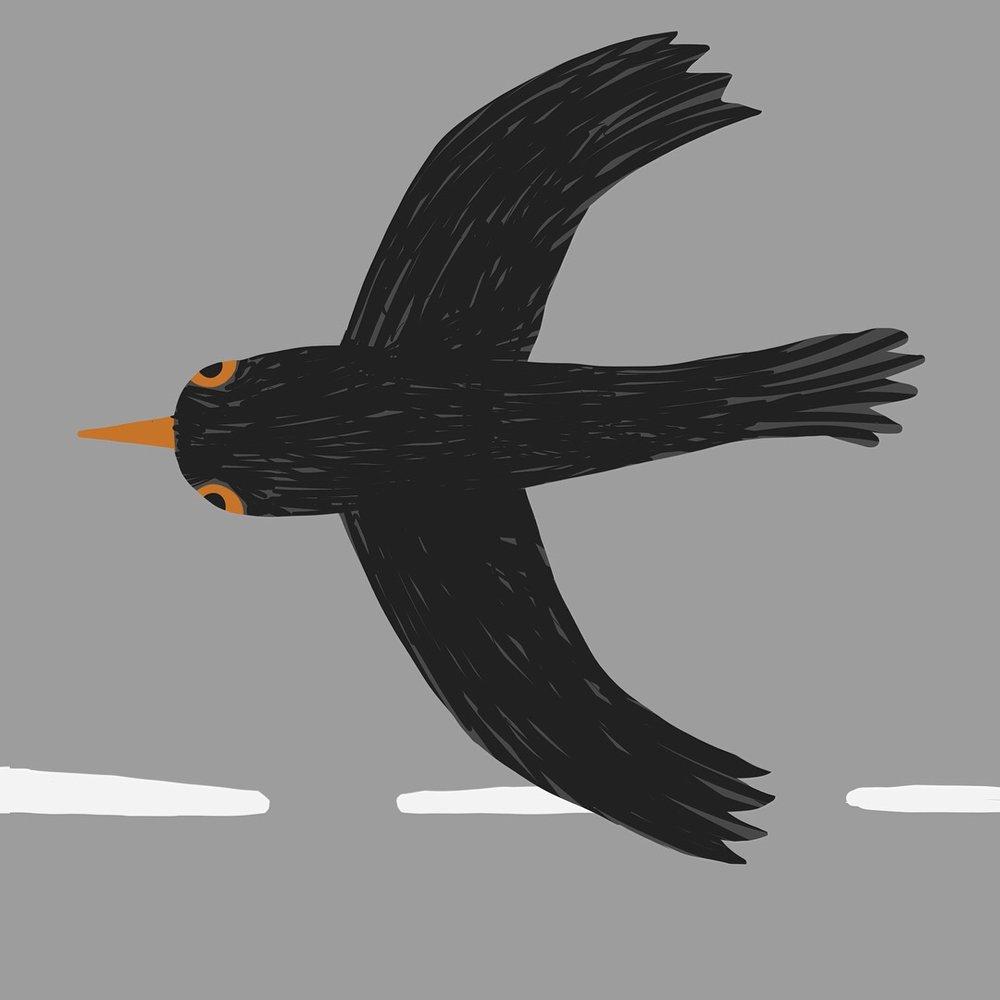 Bird_topshot_©Carys_ink