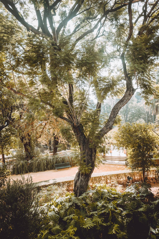 Andalucia18.jpg