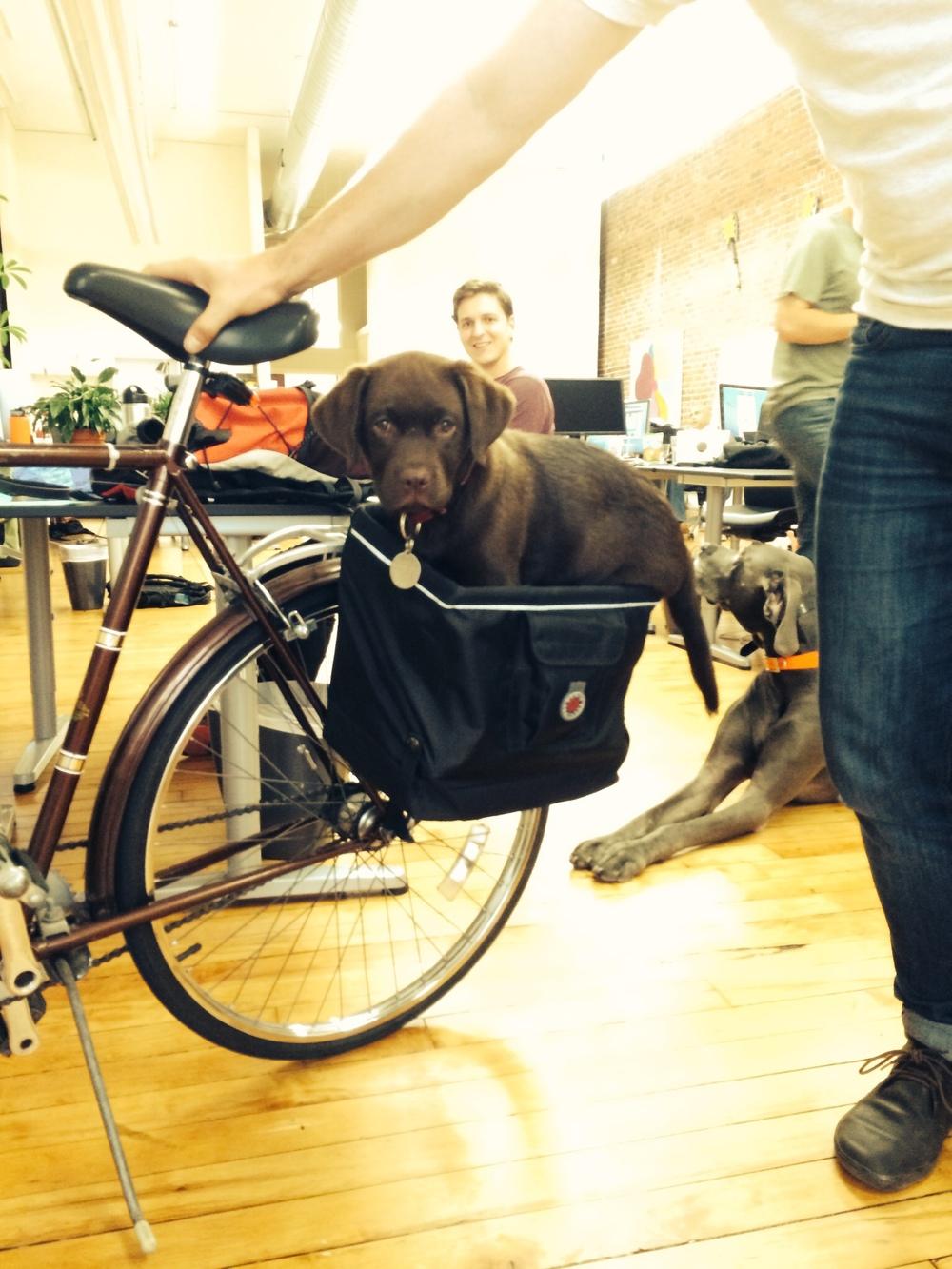 charlie in bike bag.jpg