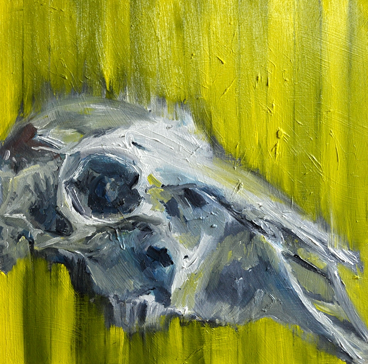Skull, 28cm x 28cm oil on board