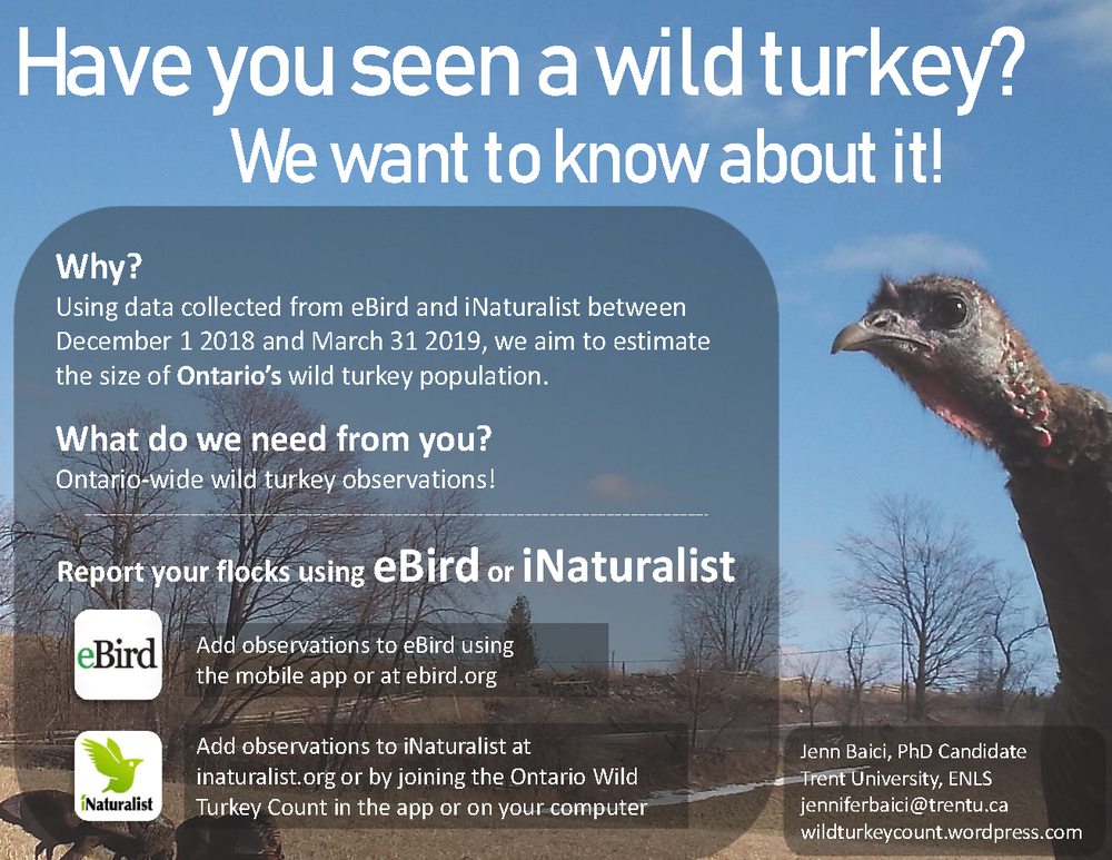 Have you seen a wild turkey 2018.png