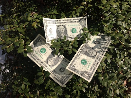 Three dollar bills on top of a green shrub