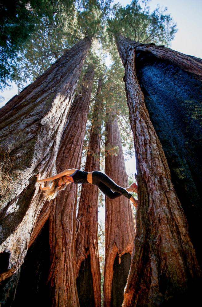 ColleenClimbingRedwoods.png