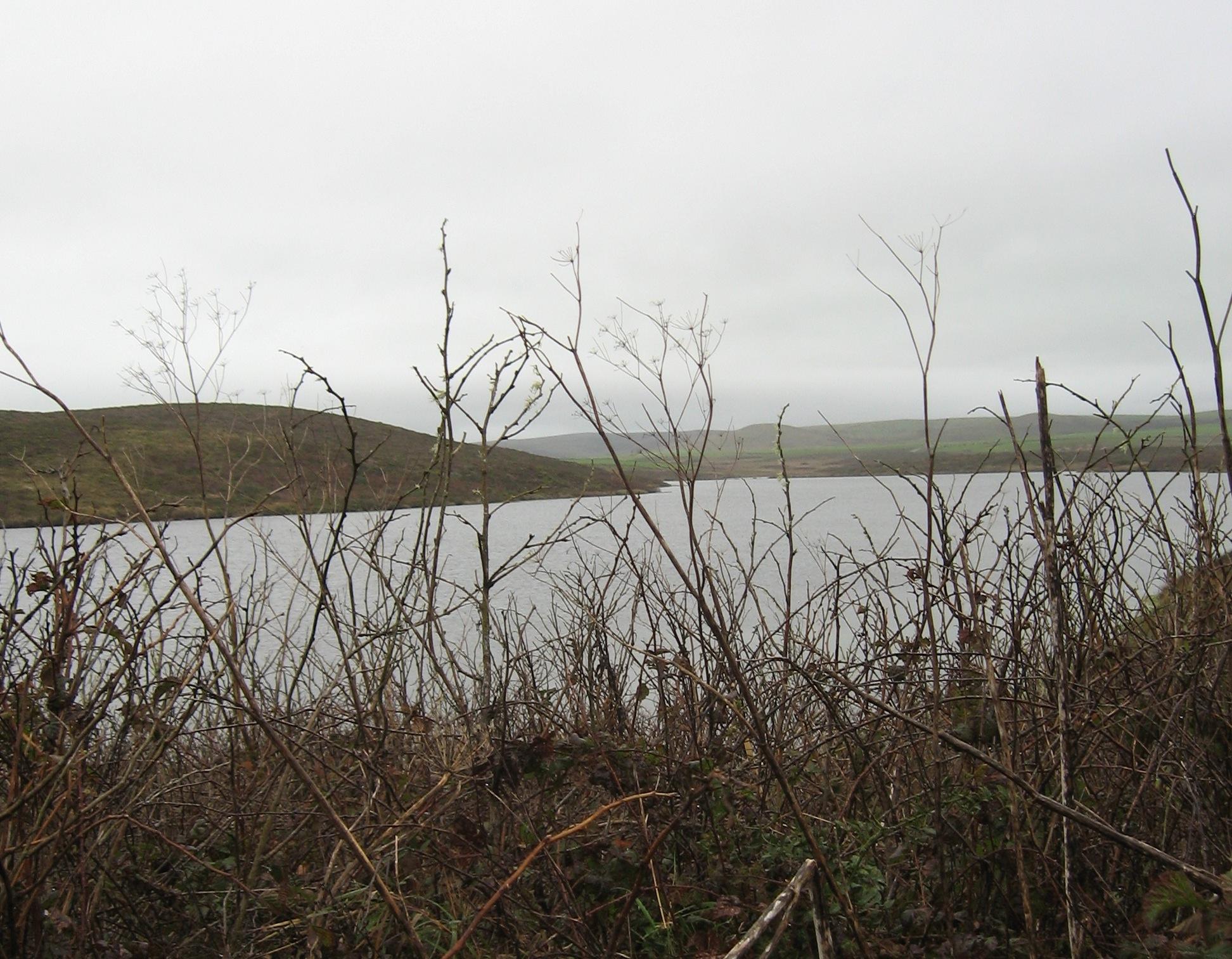 Cowbird Pond