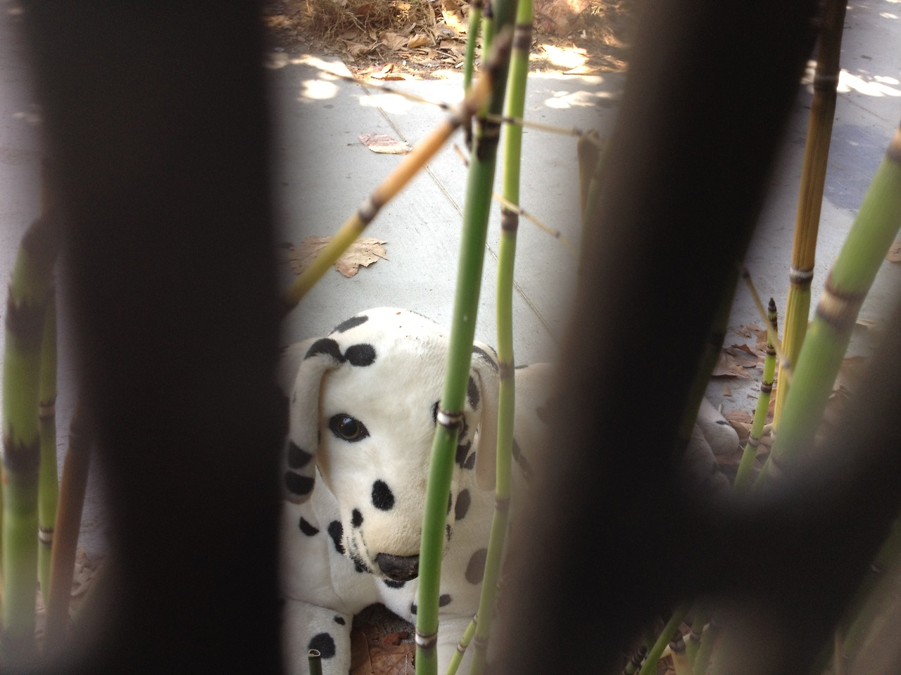 Opened up the blinds to the office today to find a life-sized stuffed Dalmatian posed outside the fence staring back at us. Strange, even for Venice.