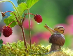 Snail with raspberry.jpg