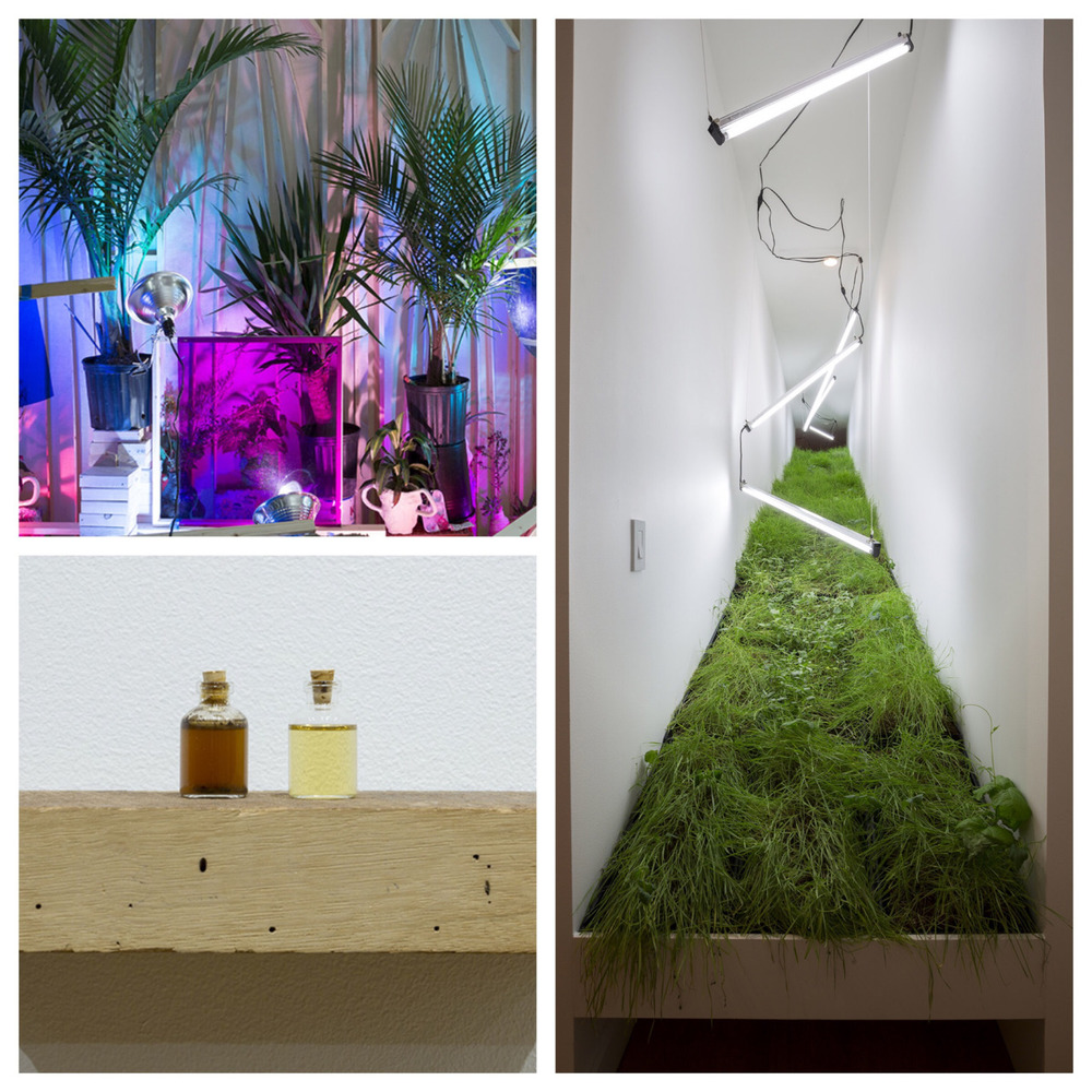 """Last months installation from Imperceptibly and Slowly Opening at Sector 2337  Sri Chowdhury """"Affected Painting""""  Linda Tegg """"Terrain (Prairie Grass)""""  Lindsey French """"some alteration of the one who feels""""  ©Clare Britt Photo"""