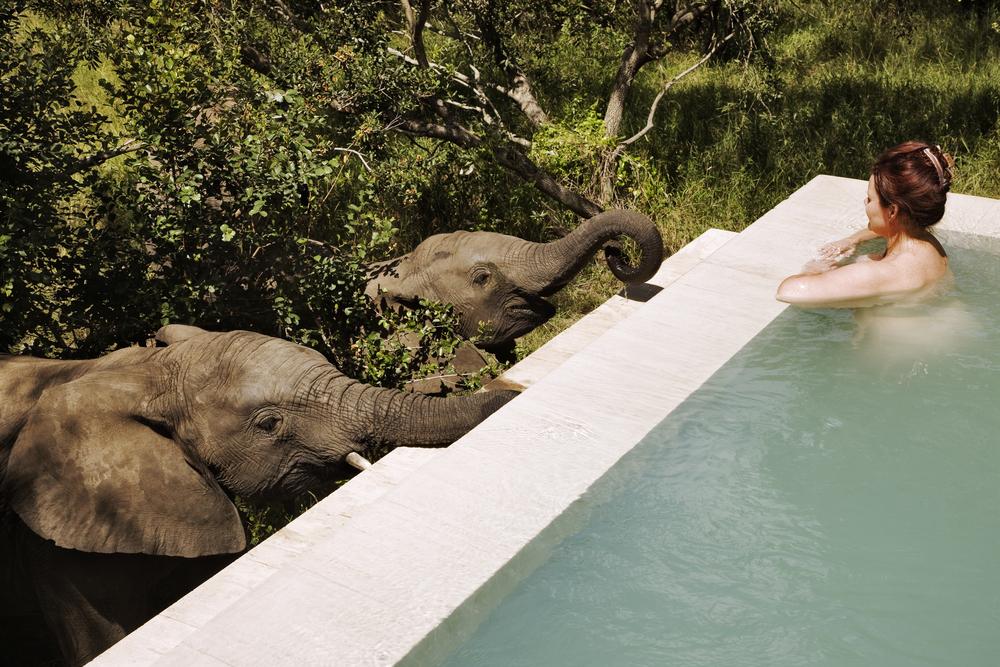 Royal Malewane Luxury Room Pool.jpg