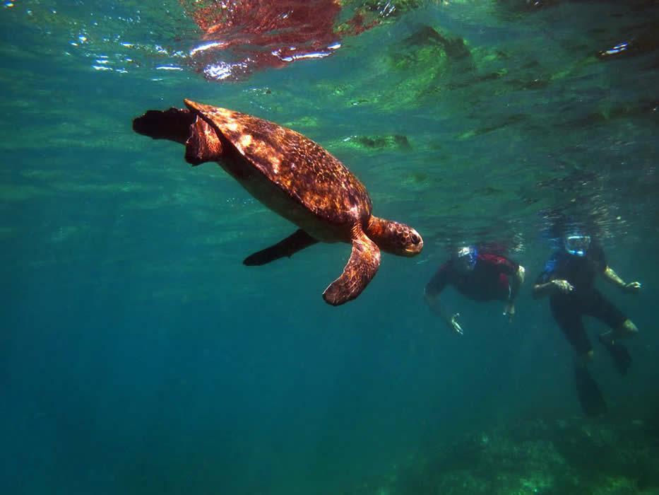 Galapagos-Finch-Bay-turtle.jpg