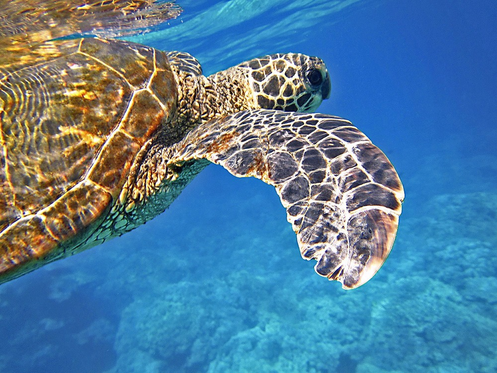 sea-turtle-547163_1280.jpg