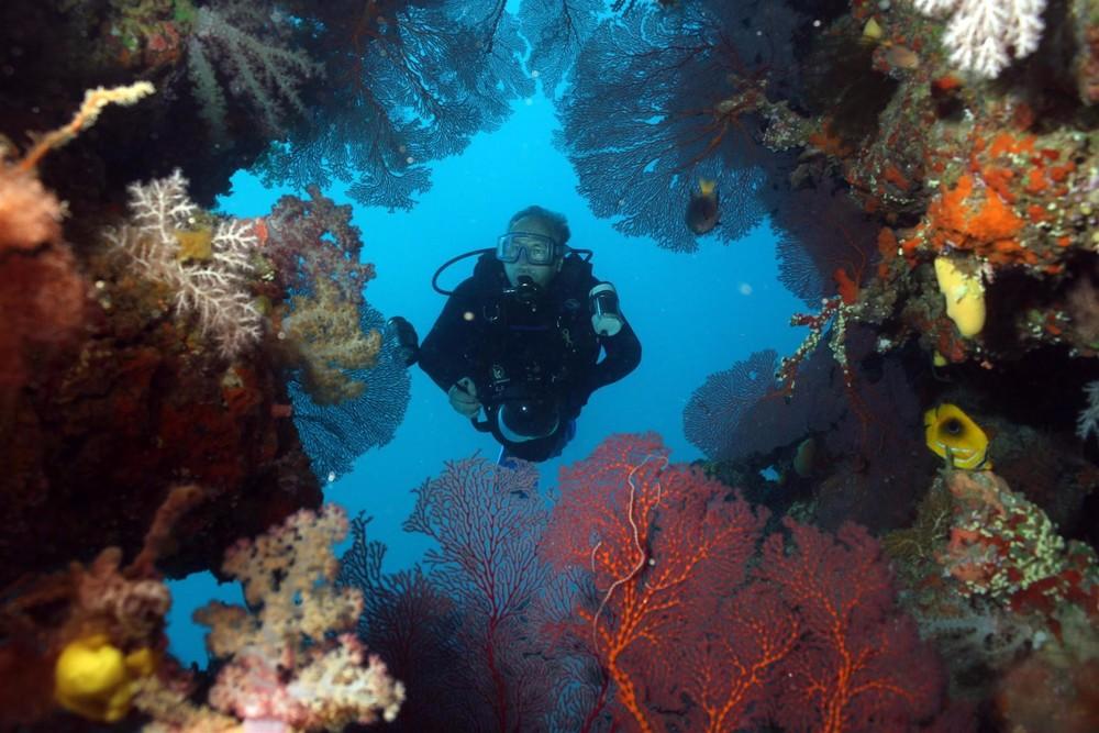 Diver-in-Swimthru1.jpg