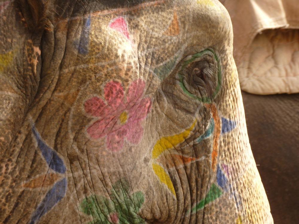 elephant-4388_1920.jpg