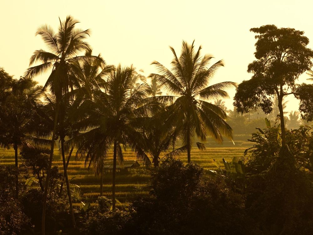 umaubud_bkg_rice_field.jpg
