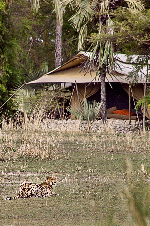 LCC-Tanzanie-Alejandragomez-ext-tent-2960-2.jpg