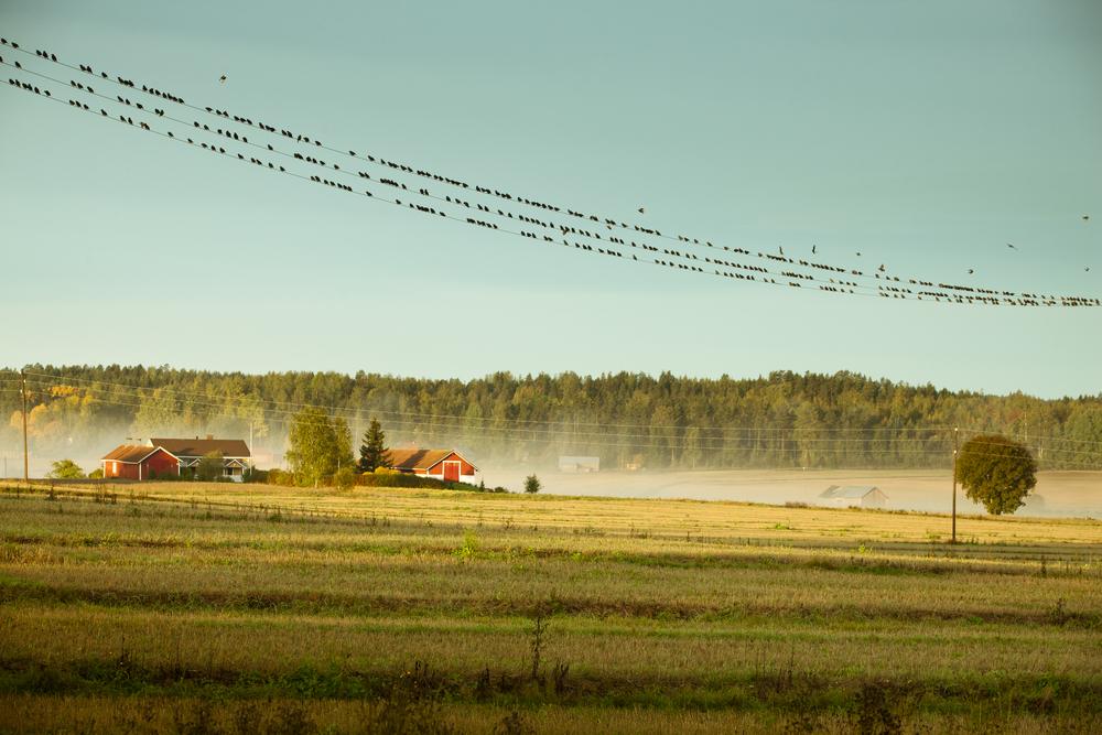 Finland_Autumn_008_3064.jpg