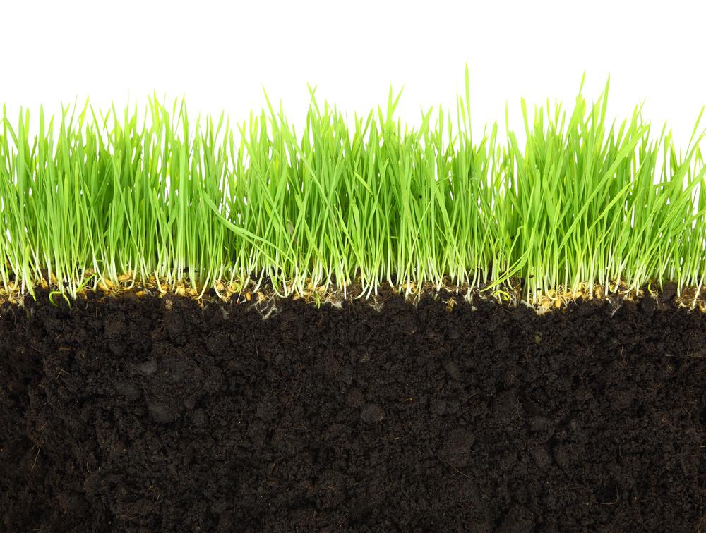 Lawn Fertilization The Woodlands