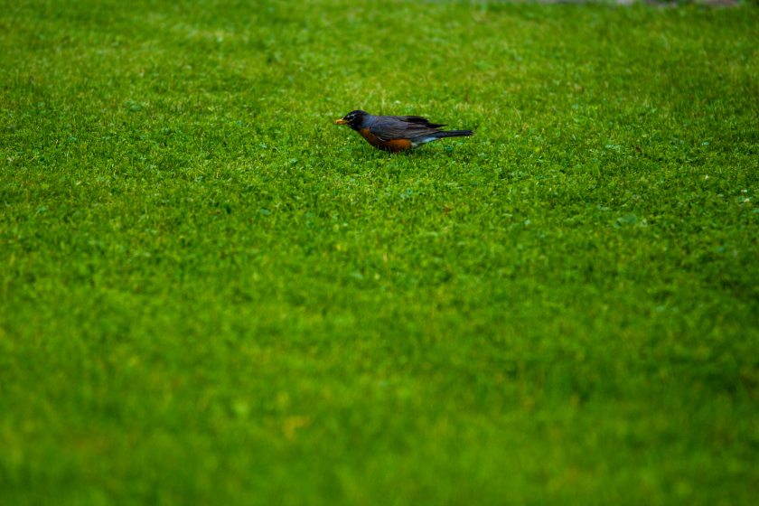 Summer Lawn Secrets