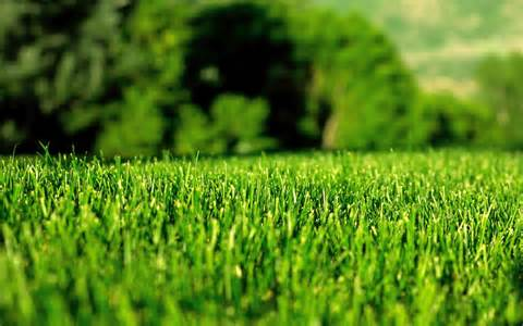 Lawn without brown patch in the woodlands texas