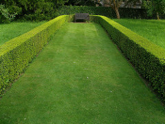 Pruned Lawn In The Springtime
