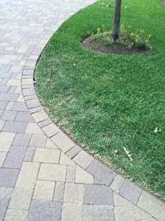 Chinch Bug Lawn Damage