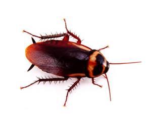 Roach The Woodlands, Texas