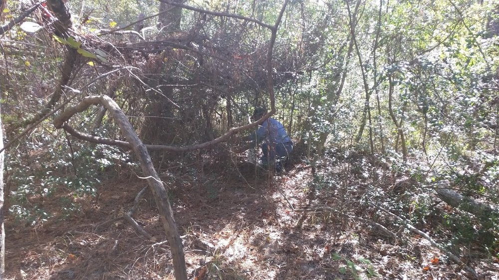Rodents Removed The Woodlands