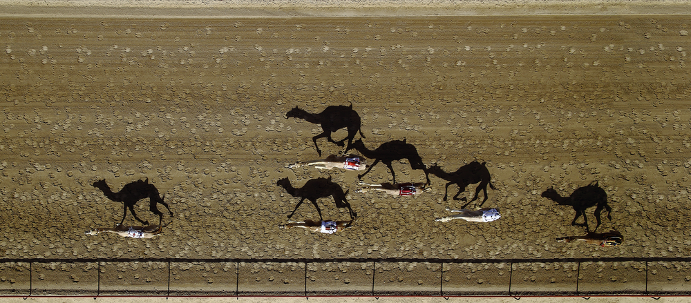 2016 #NYCDFF STILL PHOTOGRAPHY WINNER:  Al Marmoum Camel Racing by Shoayb Khattab