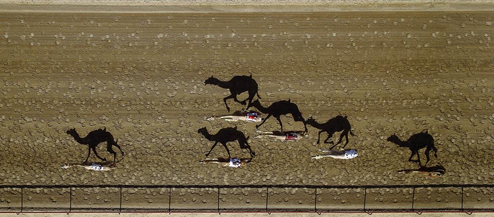 2016 #NYCDFF STILL PHOTOGRAPHY WINNER: Al Marmoum Camel Racing by Shoayb Khattab