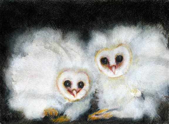 owls_barn_chicks_fluffy_sm.jpg