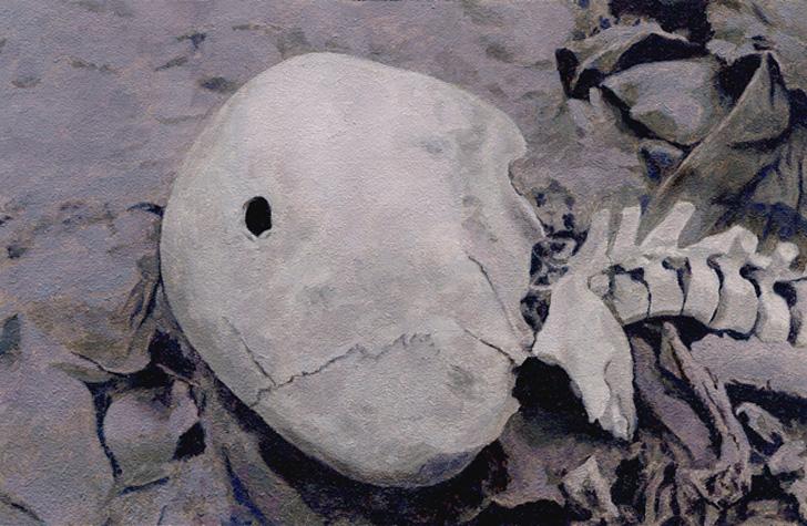 Un equipo de arqueólogos patrocinados por National Geographic ha descubierto una  calavera de más de 500 años que pertenece al primer muerto por disparo de arma de fuego en el Nuevo Mundo, un inca.
