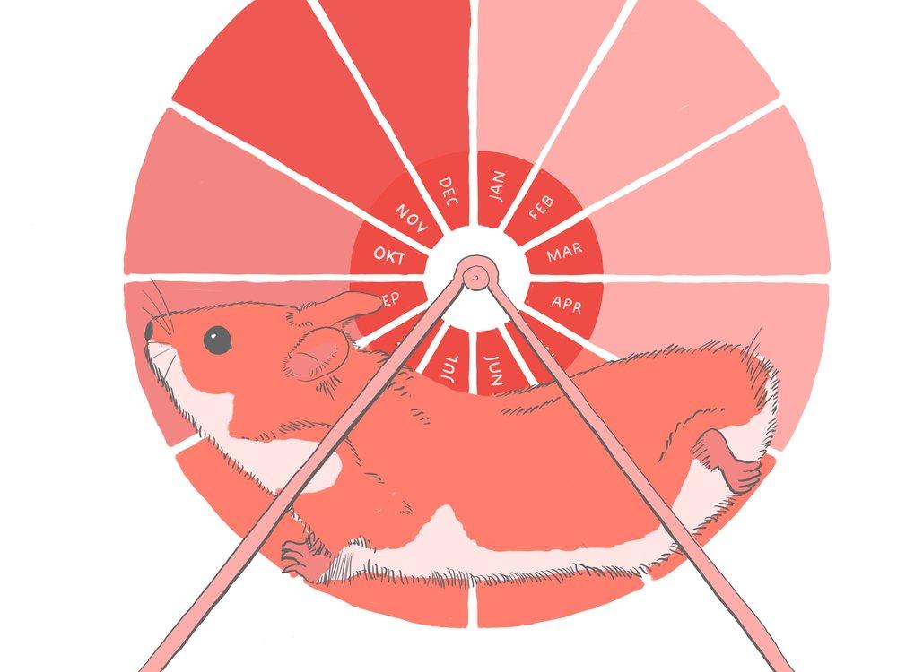 hamsterhjul med ben.jpg