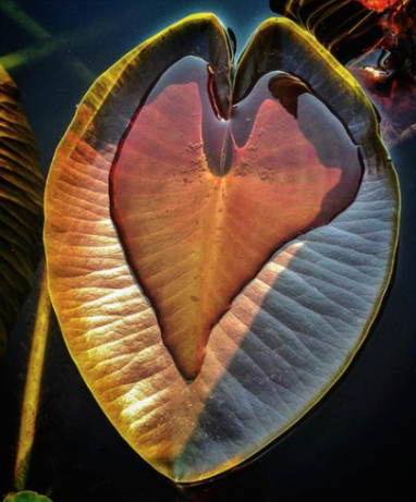 The Nature of the Heart is to Hold...