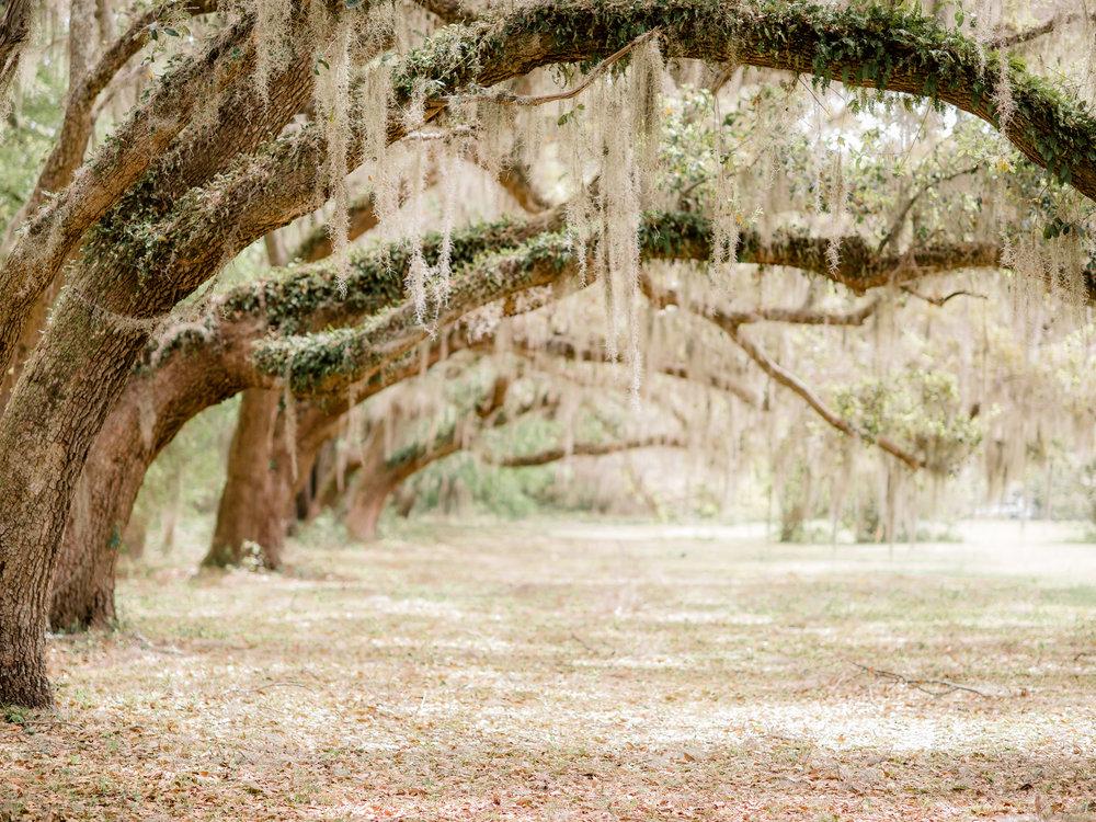 009litchfield_plantation.jpg