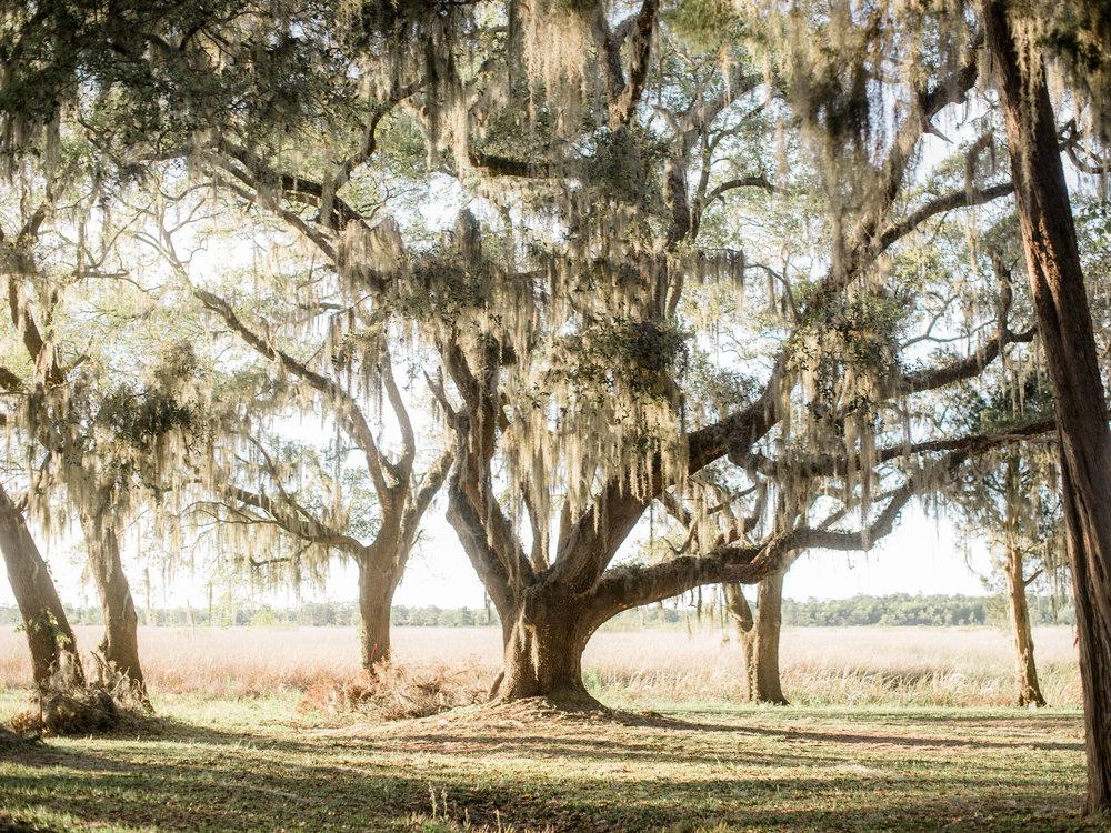 023litchfield_plantation.jpg